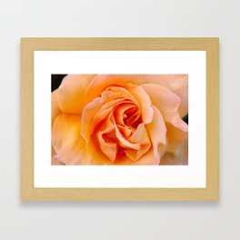 Regent Framed Art Print