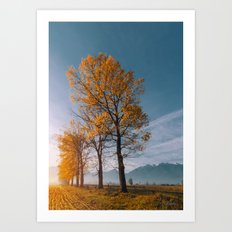 Golden trees Art Print