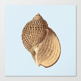 Sea Shell Three Canvas Print