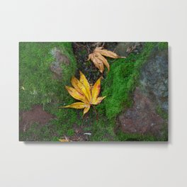 Nature photography - Fallen autumn leaf  Metal Print