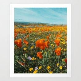 California Wildflower Poppy Superbloom Art Print