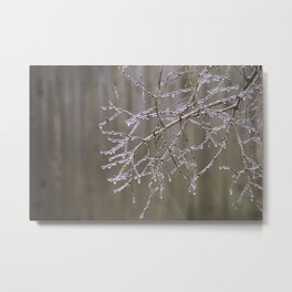First Frost Metal Print