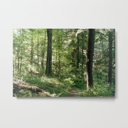 Quiet Forest, Follow the Yellow Metal Print