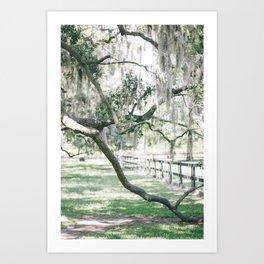 Charleston Spanish Moss at Boone Hall Plantation Art Print