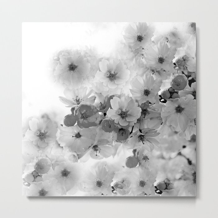 CHERRY BLOSSOMS IN BLACK AND WHITE Metal Print