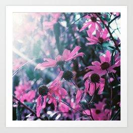 Purple Sunflowers Art Print