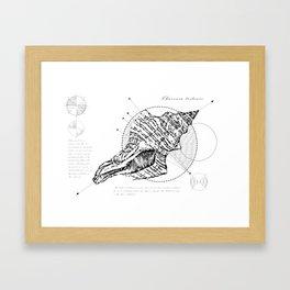 Geometry of a Charonia tritonis Framed Art Print