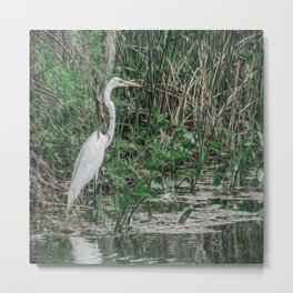 Just Wading Around Metal Print