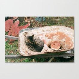 Cat in a Wheelbarrow Canvas Print