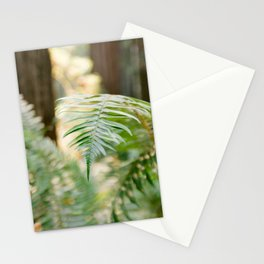 Fern Beneath the Redwoods Stationery Cards