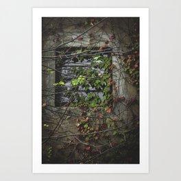 Vines Over a Window Art Print