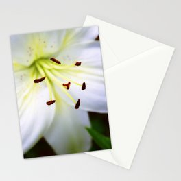 White Easter Lily Close Up Stationery Cards