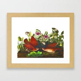 Key-west Dove Framed Art Print