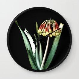 Vintage Knysna Lily Botanical Illustration on Black (Portrait) Wall Clock