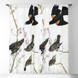 12,000pixel-500dpi - Red-winged Starling Or Marsh Blackbird - John James Audubon Blackout Curtain