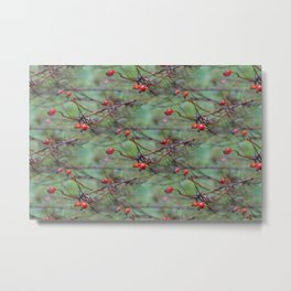 Small rosehips on bare branches Metal Print