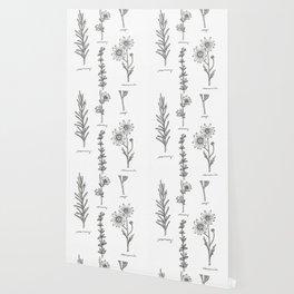 Kitchen Herbs Wallpaper