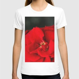 Red Rose Flower Close up T-shirt