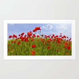 Field of Poppies | panoramic view Art Print