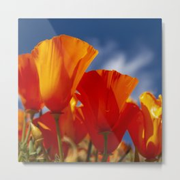 California Dark Orange Tangerine Poppies in Sunny Field Metal Print
