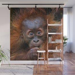 Extraordinary Animals - Orang Baby Wall Mural