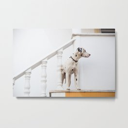Dalmatian on Steps Metal Print