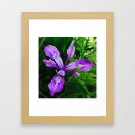 Wild Purple Iris Framed Art Print
