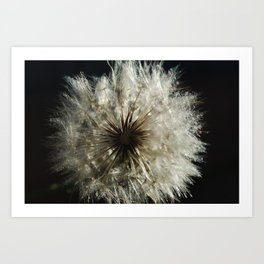 lionflower Art Print