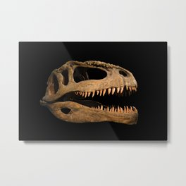 The skull of the dinosaur Metal Print