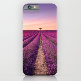 Lavender and lonely trees uphill on sunset. Provence, France iPhone Case