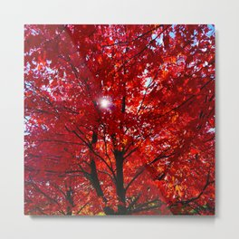 Sun Through Maple Leaves Metal Print