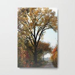 Fall Walk Metal Print