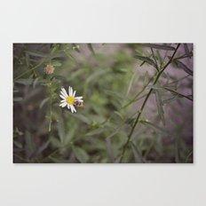 Small Honeybee Canvas Print