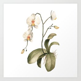 Watercolor Orchid Art Print