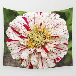 Candy Cane Zinnia Wall Tapestry