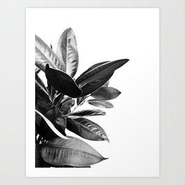 Grandiflora II - bw Kunstdrucke