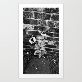 Urban Poppy Art Print