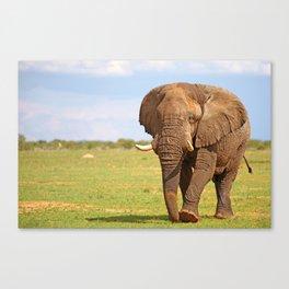 Big Elephant in Namibia Canvas Print