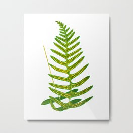 Antique Green Fern Print No.2 Botanial Art Metal Print