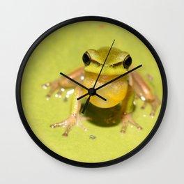 Wallum sedge frog Wall Clock