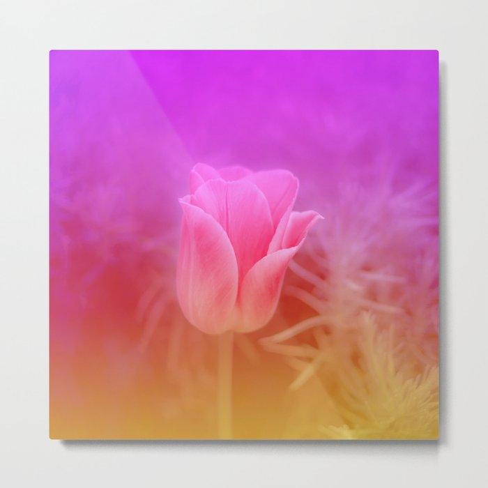 Pinky Tulip Metal Print