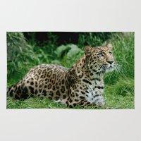leopard Area & Throw Rugs featuring Leopard by Julie Hoddinott