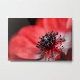 Red Anenome. Metal Print