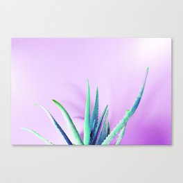 Aloe Vera Succulent with Pink Background Canvas Print
