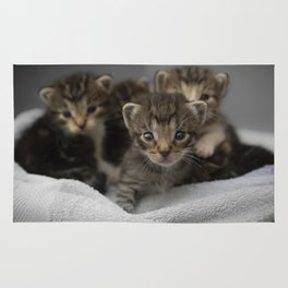 Photo of a group of cuddly kittens Rug