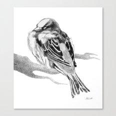 Sparrow Bird Snoozing Canvas Print