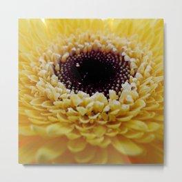 Yellow Germini Close Up Metal Print
