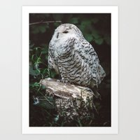 hedwig Art Prints featuring hedwig by Leanne Taylor Collection