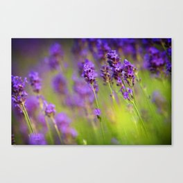 Textured background of lavender flowers Canvas Print