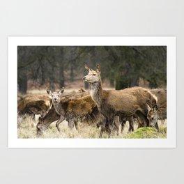 Richmond Deer Art Print